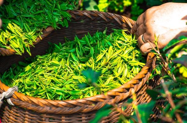 tea-1309015_1280