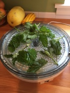 Spread in a single layer on your dehydrator to dry for tea.